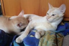 Pemba-Kitten-3